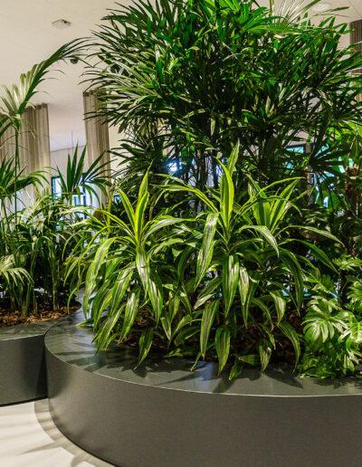 Grote plantenbakken interieurbeplanting vd vleuten