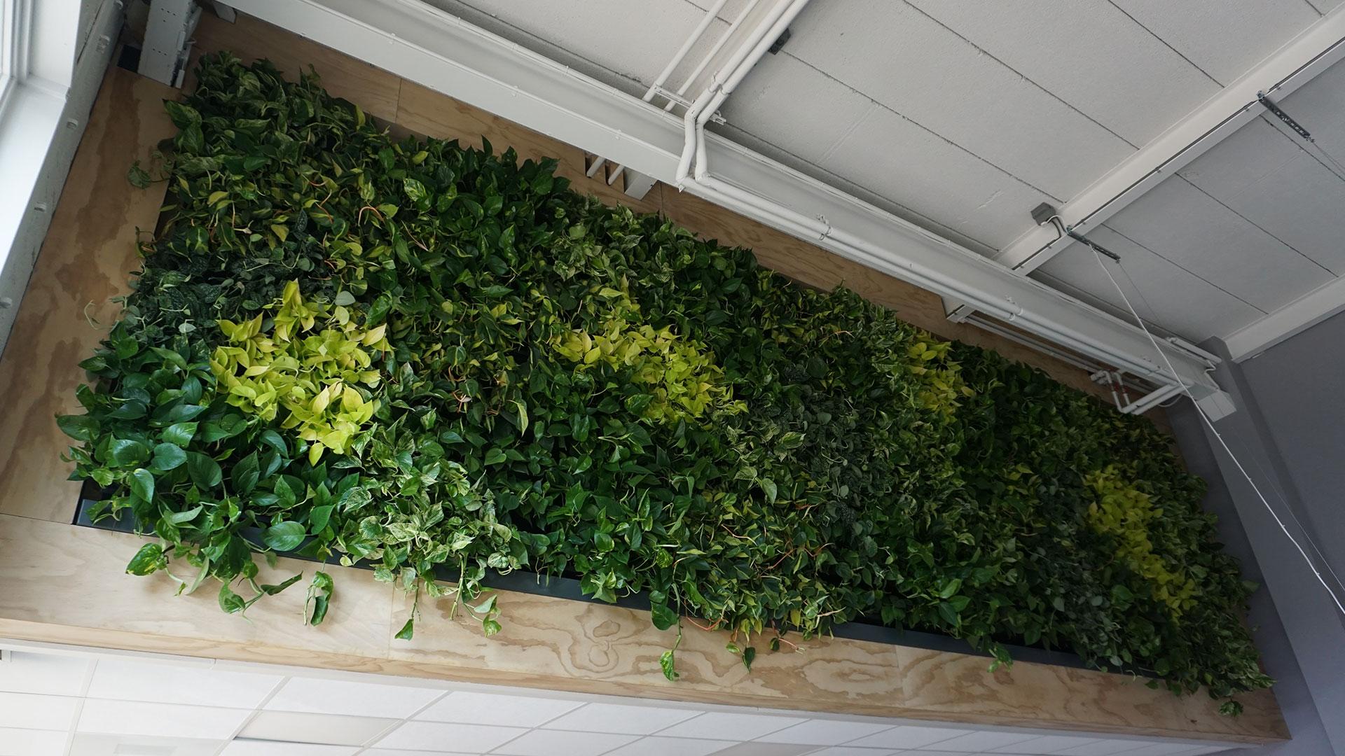 Interieurbeplanting groene wanden