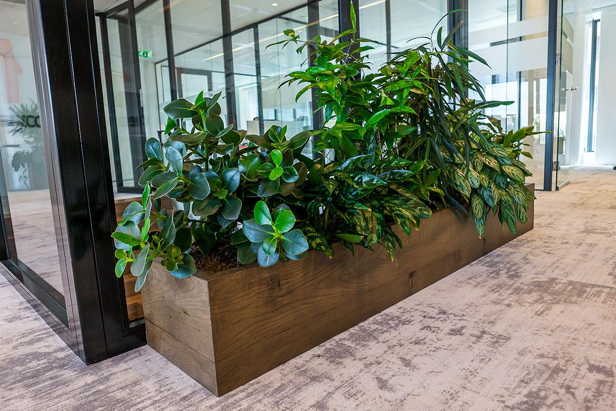 Interieurbeplanting kantoorplant en bak