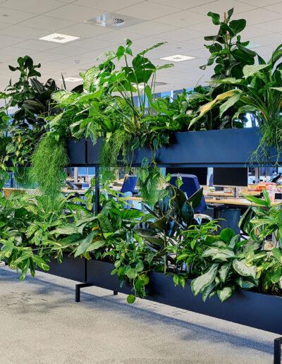 Interieurbeplanting kantoorplanten