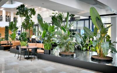 Biophilic Design: ontwerpen met de natuur