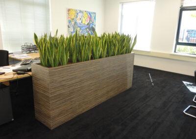 Langwerpige planter HPL sanseveria laurentii