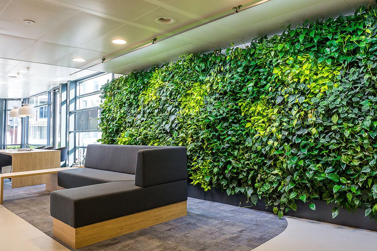 kantoorplanten groene wand