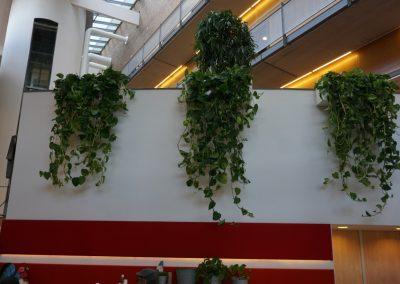 3 hangplanten witte muur