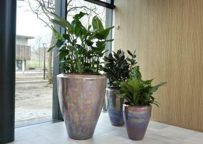Ecri Parelluster met Strelitzia Nicolai kantoorplant
