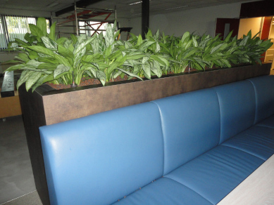 Maatwerk plantenbak met Aglaonema Silverbay