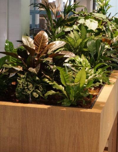 houten maatwerkbak met mixbeplanting
