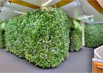 Groenewand plantenwand