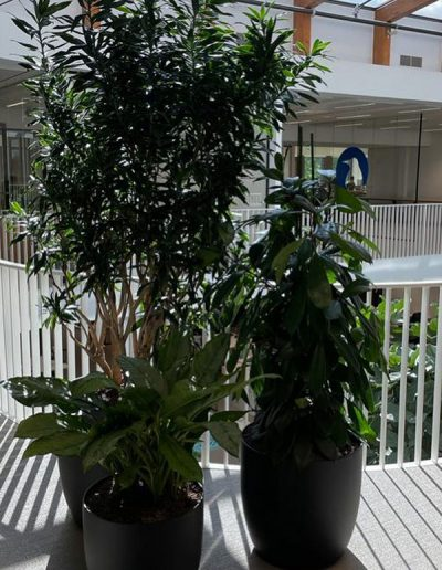 Kantoorbeplanting Interieurbeplanting van der Vleuten