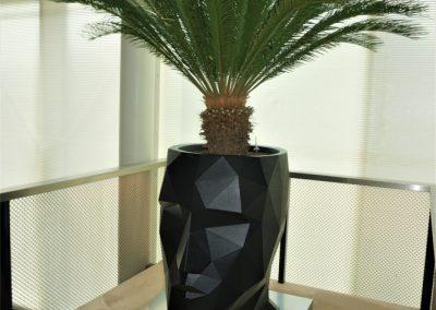 Adan hoofd planter met Cycas palm