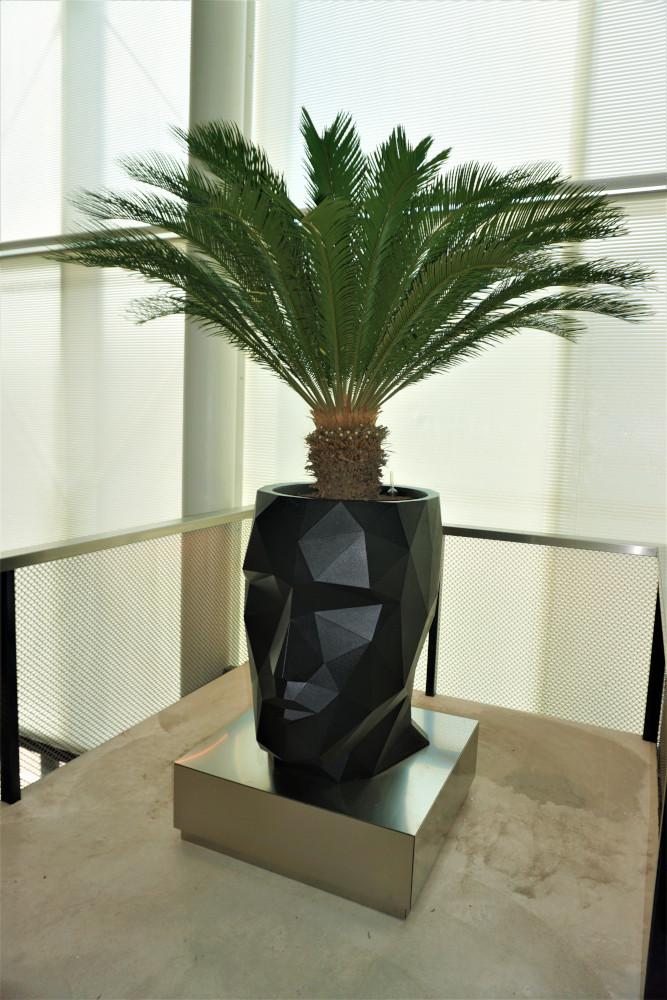 Adan hoofd planter met Cycas palm SintLucas