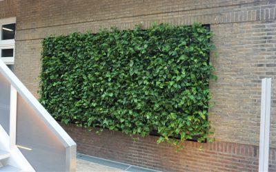 Meer groen op onderwijsinstellingen